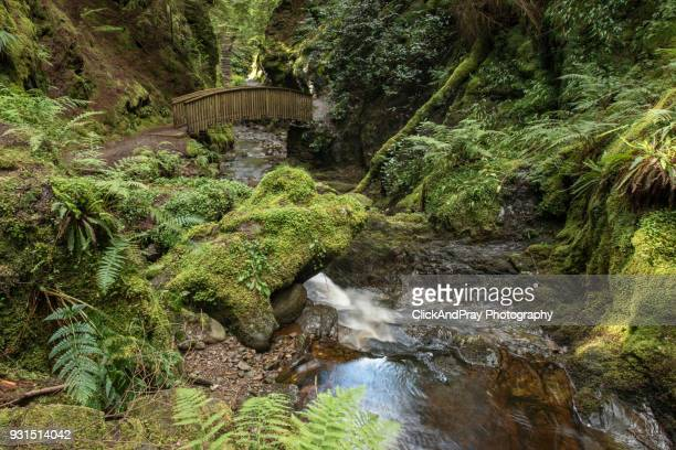 stairway to heaven - argyll and bute stock photos and pictures