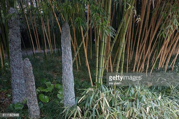 stalagmite and bamboo grove,yangzhou,jiangsu,china - yangzhou foto e immagini stock