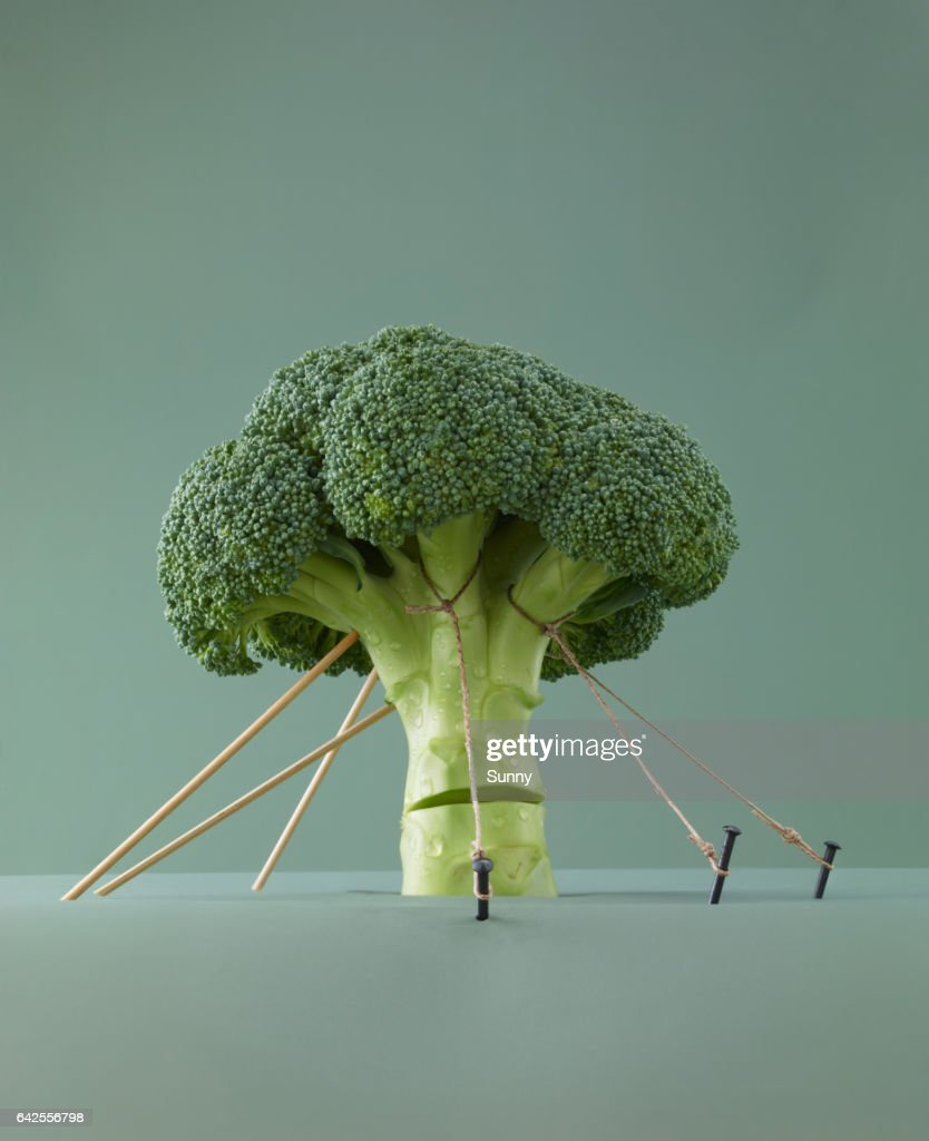 Stalk of Broccoli being held up by ropes : Stock Photo