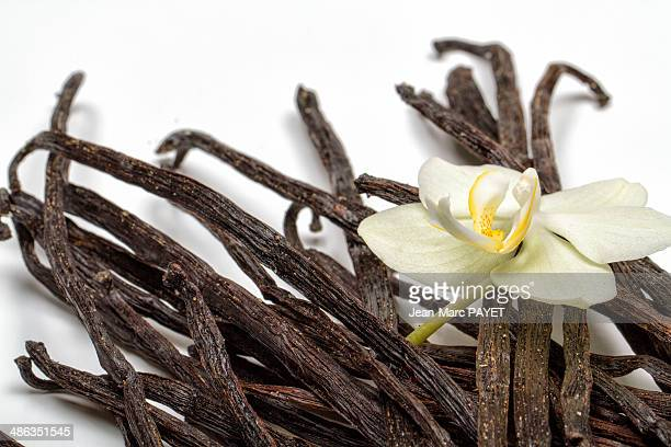 stalks of vanilla in heap - jean marc payet stock pictures, royalty-free photos & images