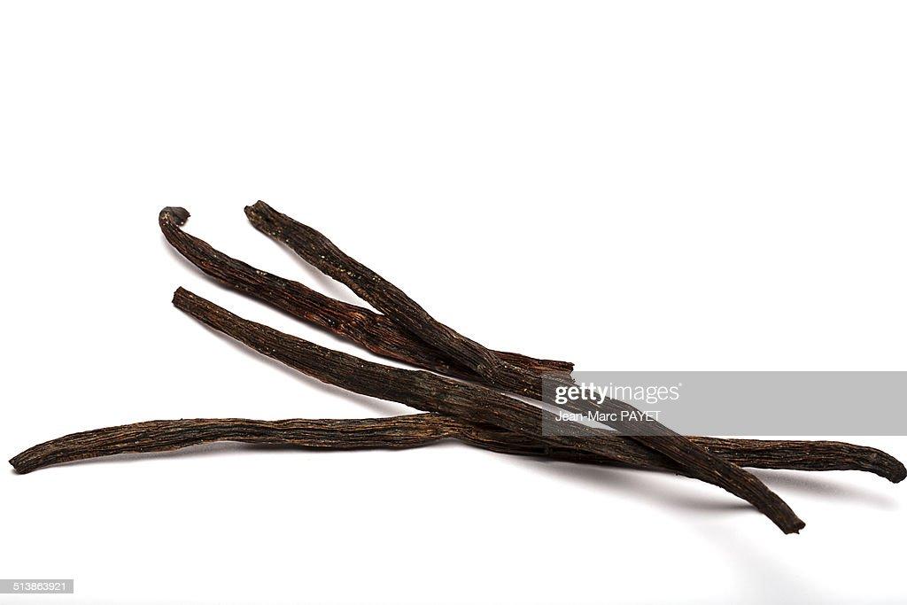 Stalks of vanilla : Photo