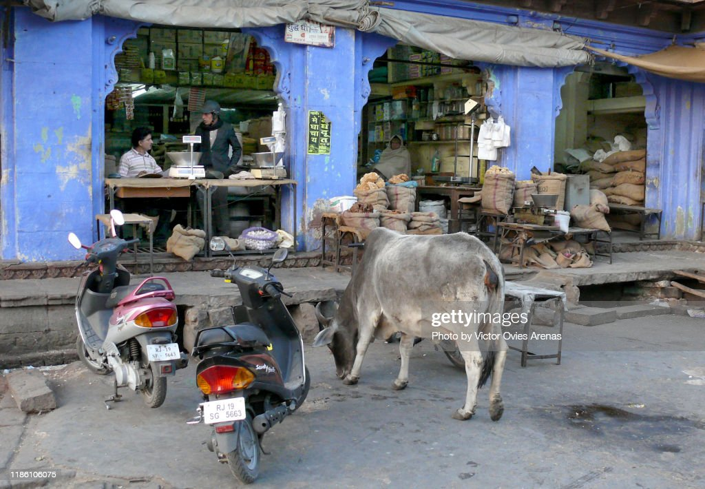Stall vendors, cows and motorbikes side by side at the Sardar Market in Jodhpur, Rajasthan, India : Foto de stock