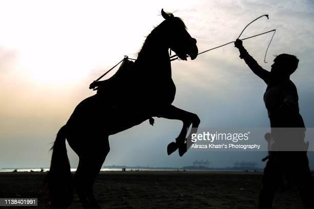 stallion and master - 馬場馬術 ストックフォトと画像