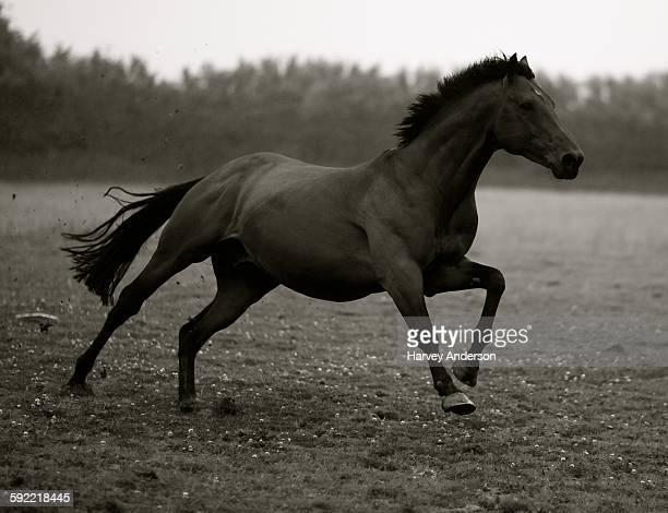 すべての動物画像: 最高かつ最も包括的な美しい 馬 かっこいい