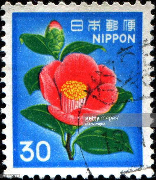 CIRCA 1980 A stamp printed in Japan shows a flower Japanese Camellia