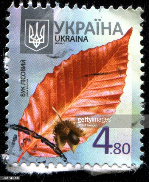 A stamp printed in Ukraine 2012 shows a leaves and seeds of the European Beech from the series 'Flora'