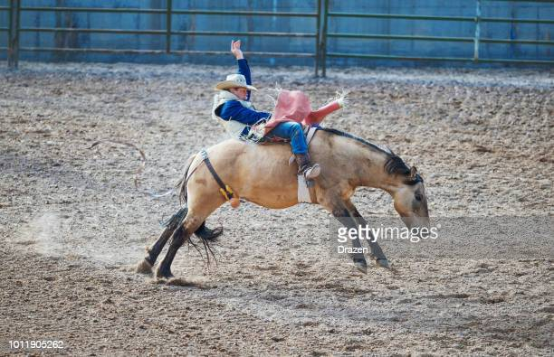 stampede rodeo in america - skilled cowboy riding wild horse - stampeding stock pictures, royalty-free photos & images