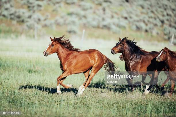 stampeding wild horses in usa - horses running stock pictures, royalty-free photos & images
