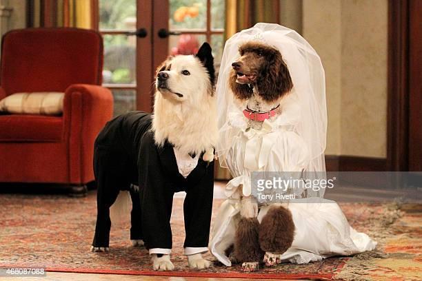 Worlds Best Disney Channels Dog With A Blog Season Three
