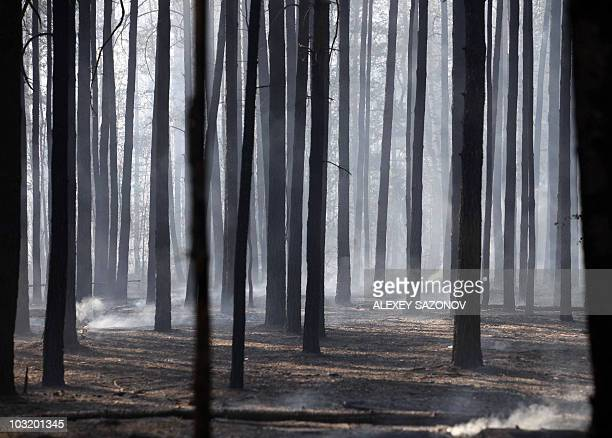 A stand of charred birch and evergreen trees is seen filled with drifting smoke on the outskirts of Voronezh on August 1 2010 Firefighters fought an...
