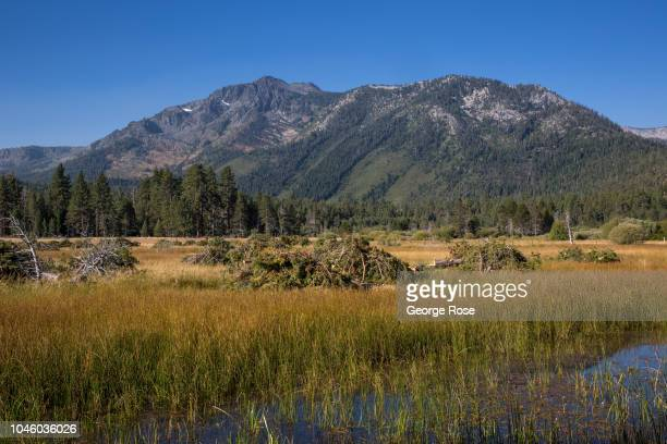 Stand of trees and brush adjacent to the marsh at Baldwin Beach is piled up and ready for a prescribed burn on August 25 at South Lake Tahoe,...