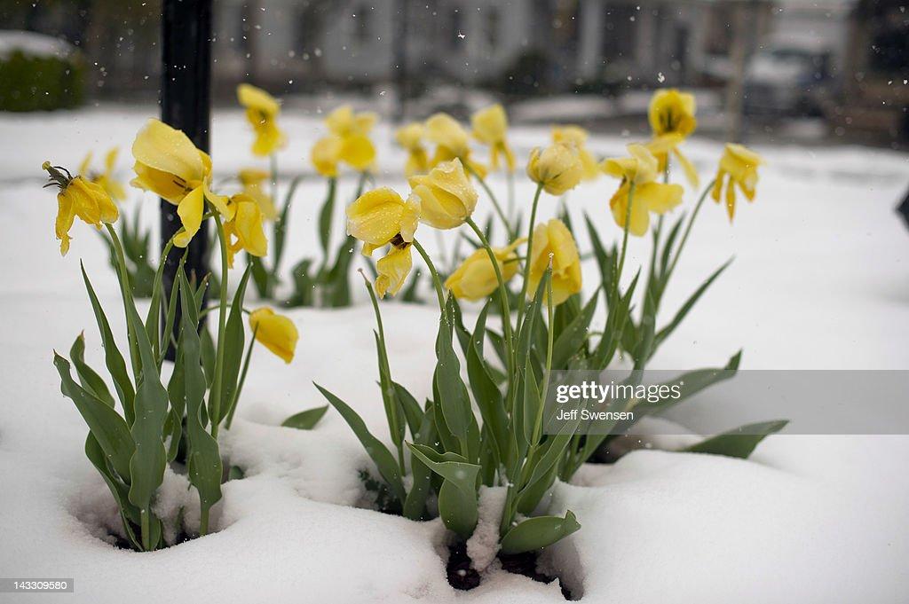 April Storm Dumps Snow Across Northeastern U.S. : News Photo