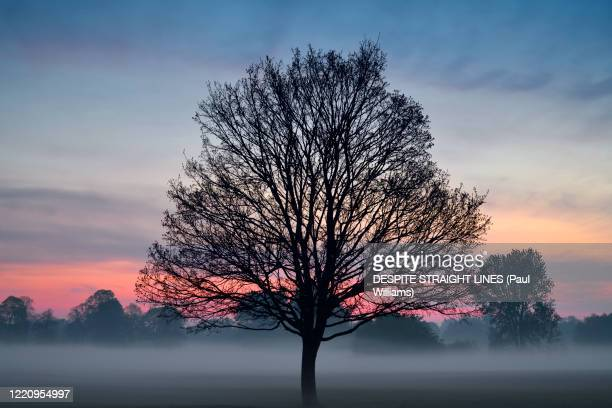stand tall - morning stock pictures, royalty-free photos & images