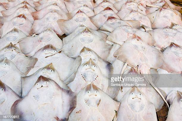 Stand with perfectly aligned rows of fresh rays for sale in the local market of Oujda, Oriental Region, Morocco. Oujda relies heavily on trading...
