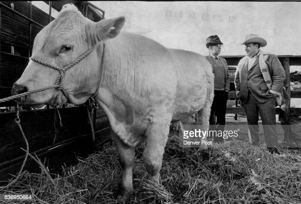Standing behind one of Fred Mezey's Charolais bulls are Paul Bertshe left a breeder from Flanagan lll and Mezey Credit The Denver Post