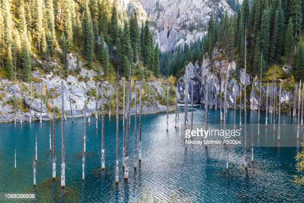 standing blue water with trees - kazakhstan stock pictures, royalty-free photos & images