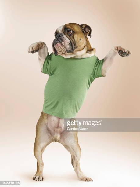Standing Bulldog Wearing T-shirt