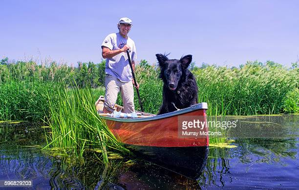 standing canoeist and dog in marsh - murray mccomb stock pictures, royalty-free photos & images