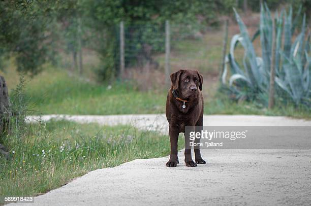 standing dog - dorte fjalland stock pictures, royalty-free photos & images