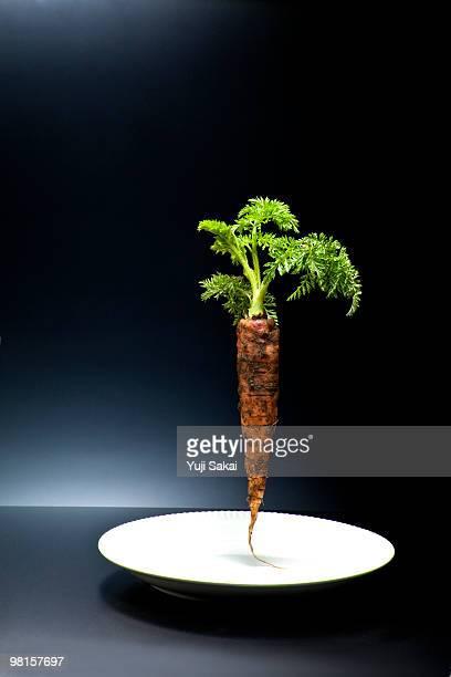 standing freshly carrot  on  plate