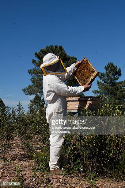 Standing in front of the beehives