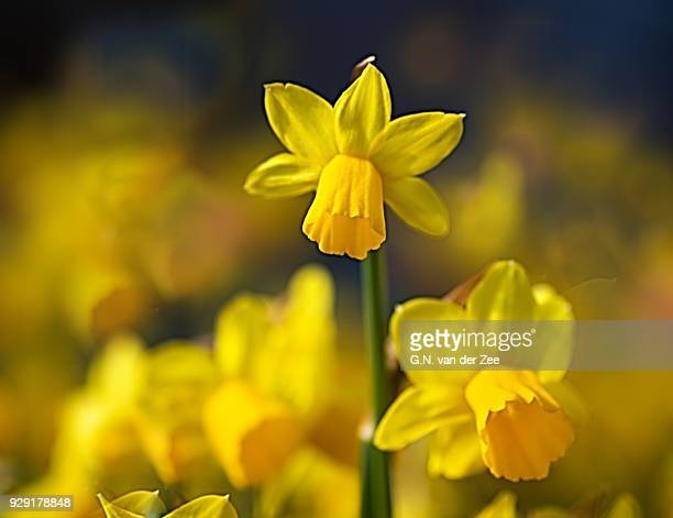 standing out from the crowd - narcissus mythological character stock photos and pictures