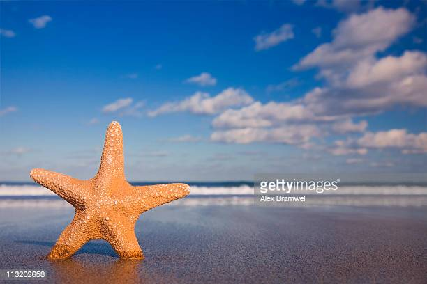 standing starfish - starfish stock pictures, royalty-free photos & images