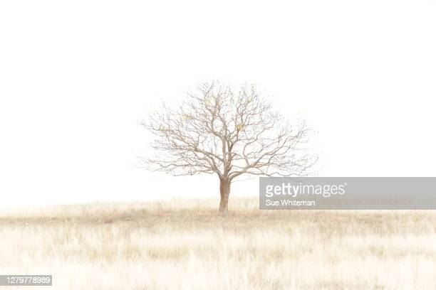 standing tall in the paddock - light natural phenomenon stockfoto's en -beelden