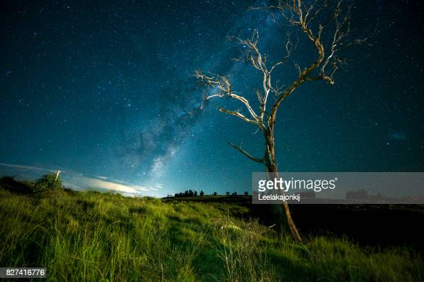 Standing tree with Milky Way