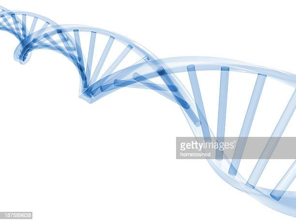 3d dna stands - dna stock pictures, royalty-free photos & images