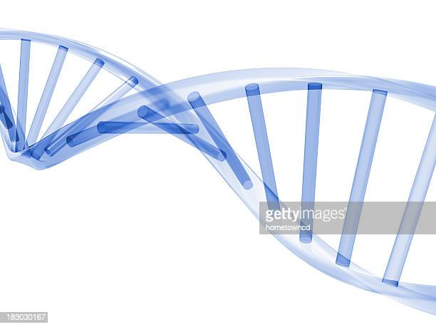 3d dna stands - organic compound stock photos and pictures
