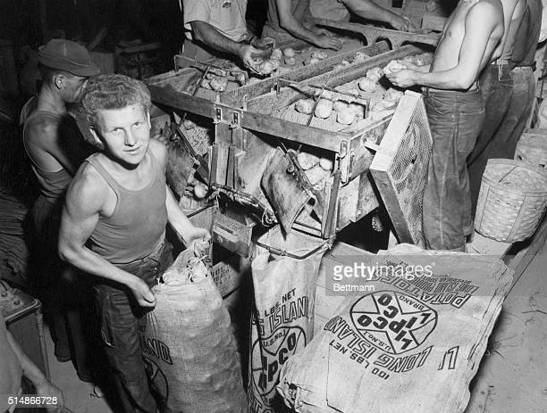 Stanislaw Kulminski packs potatoes at a farm in Long Island Kulminski was 17 years old when he participated in the Warsaw insurrection During WWII he...
