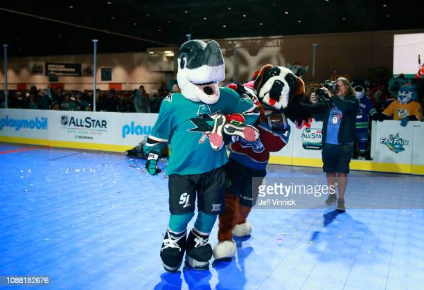 Stanley C Panther of the Florida Panthers and Bernie the St Bernard of the Colorado Avalanche participate in the 2019 NHL AllStar Mascot Showdown on...