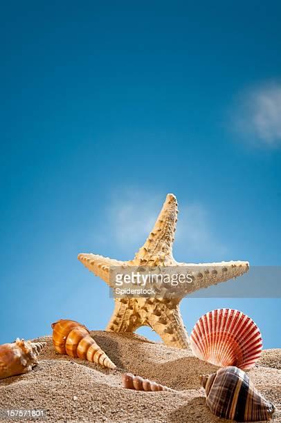 Pescado estrellas de mar y conchas en la playa