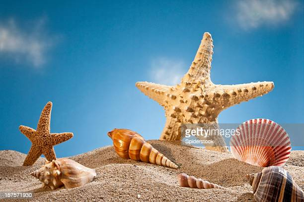 Star Fish And Sea Shells On The Sand