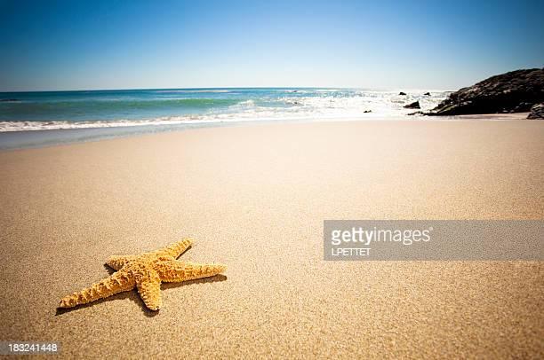 Playa de peces estrellas