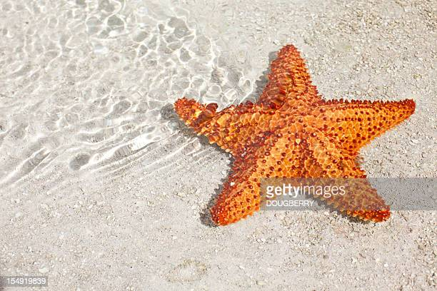 star fish - starfish stock pictures, royalty-free photos & images