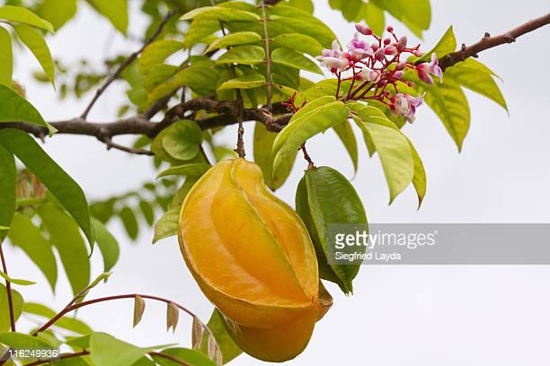 star fruit - la digue island stock pictures, royalty-free photos & images