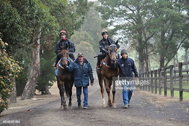 Star Rolling and Eloping walking with Co trainers Peter Morgan and Craig Widdison after a trackwork session at Talwood Park on September 5 2014 in...