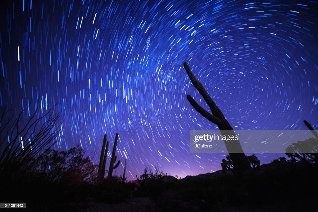 Star trail behind the silhouette of a cactus : Stock Photo