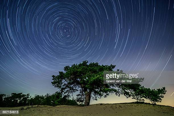 Star trail over a Pine tree