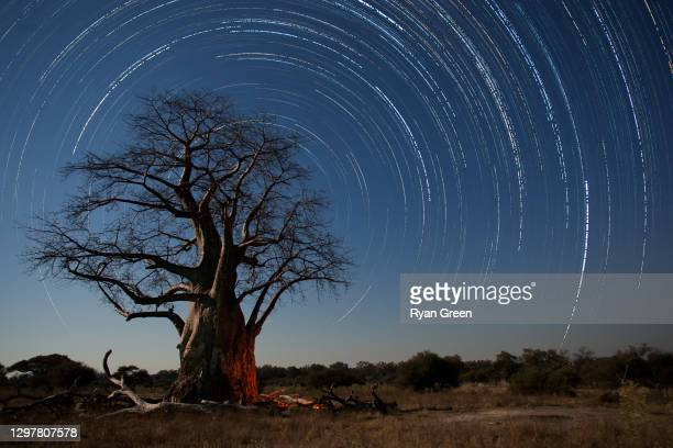 star trails and baobab tree - night safari stock pictures, royalty-free photos & images