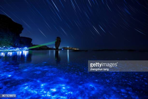 star trails in the bioluminescent bay - bioluminescence stock pictures, royalty-free photos & images