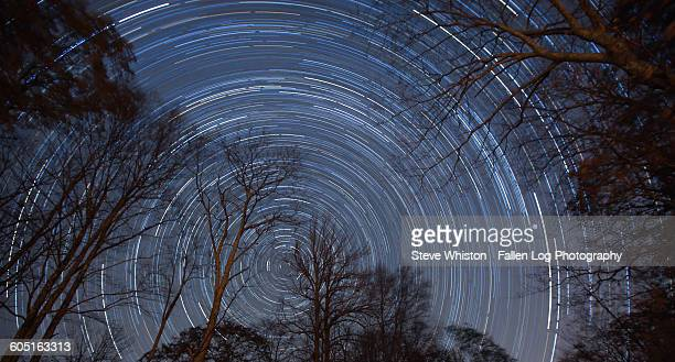 Star trails in the forest