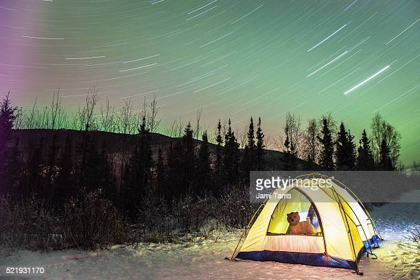 Star trails over a tent with a small dog