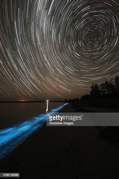 Star trails over bioluminescence in waves on the shores of the Gippsland Lakes, Victoria, Australia.