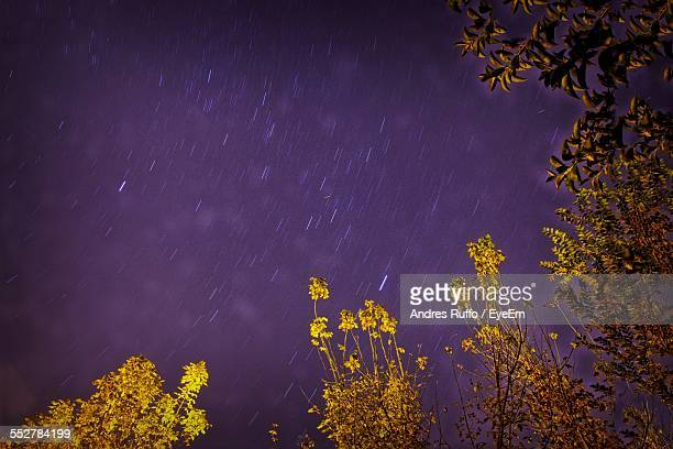 star trails over trees during night - andres ruffo stock photos and pictures