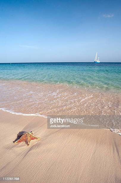 starfish and sail boat in paradise