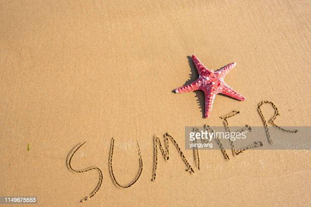 starfish and seashell on the sandy beach - august stock pictures, royalty-free photos & images