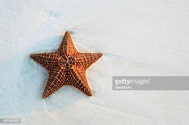 starfish at the beach - starfish stock pictures, royalty-free photos & images